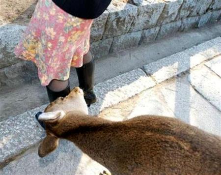 ヘンタイヤギ に貼られた cute funny animals 26 の画像