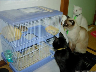 cats-funny-animal-wallpapers.jpg